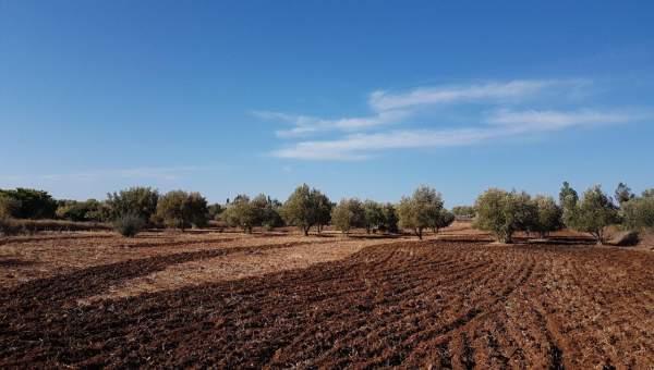 Vente terrain Terrain villa Marrakech Extérieur Route Sidi Abdellah Ghiat