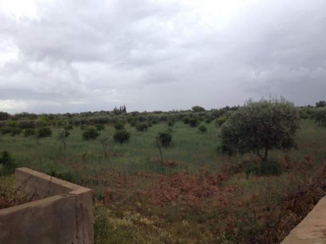 Terrain à vendre Marrakech Extérieur Route Sidi Abdellah Ghiat