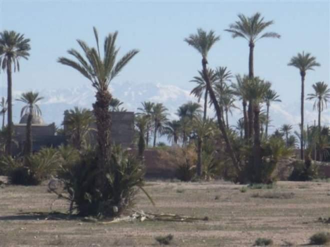 achat terrain Marrakech Palmeraie