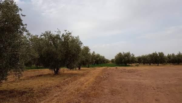 Vente terrain Terrain villa Marrakech Extérieur Route Ourika