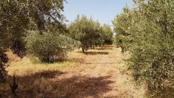 achat terrain Terrain a lotir Marrakech Extérieur Route Ourika