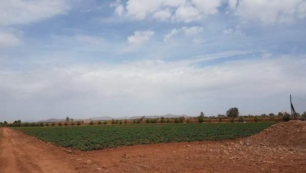 achat terrain Ferme Marrakech Extérieur Route Ouarzazate