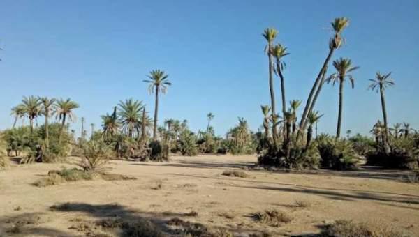 Vente terrain Terrain villa Marrakech Palmeraie Circuit Palmeraie