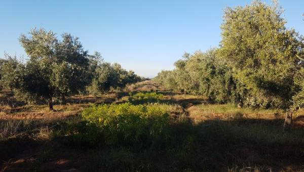 achat terrain Ferme Marrakech Extérieur Route Sidi Abdellah Ghiat