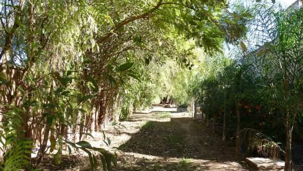 Maison à vendre Marocain épuré propriete luxe marrakech à vendre Marrakech Palmeraie Circuit Palmeraie