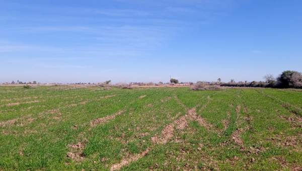 achat terrain Terrain a lotir Marrakech Golfs Al Maaden