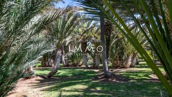 Maison à vendre Marocain épuré prestige Marrakech Palmeraie Circuit Palmeraie