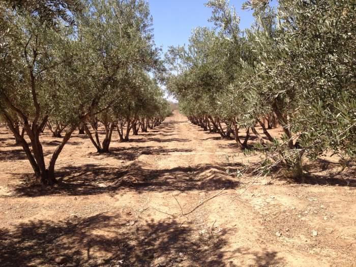 Tierra villa compra de tierras Marrakech Exterior Ruta Ourika