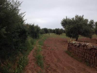 Vente terrain Ferme Marrakech Extérieur Route Sidi Abdellah Ghiat
