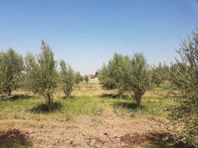 achat terrain Terrain villa Marrakech Extérieur Route Fes