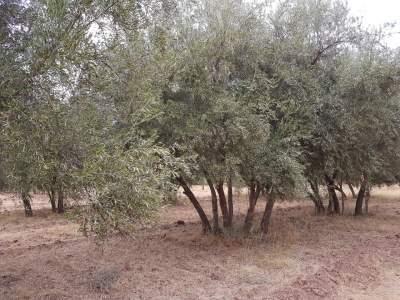 achat terrain Ferme Marrakech Extérieur Route Ourika
