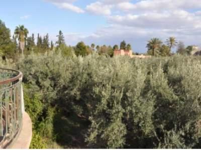 Villa à vendre Marocain épuré immobilier luxe à vendre marrakech Marrakech Palmeraie