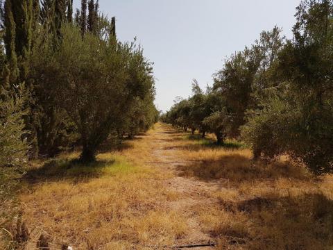 Vente terrain Terrain a lotir Marrakech Extérieur Route Ourika